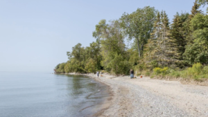 Pickering Beach